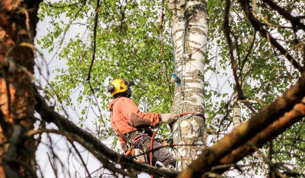 6 Reasons Why An Arborist Service Will Pay Dividends